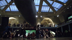 People sitting underneath the blue whale at the Museum of Natural History in 4K Stock Footage