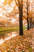 Fallen foliage in alley tree at river coast at sunshine time fall autumn seas Stock Photos