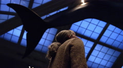 Woman looking around under the big whale at Natural History Museum 4K New York Stock Footage