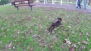 Stock Video Footage of Puppy running in slow motion