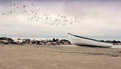 Dolly - flock of birds flying above an anchored boat Stock Footage