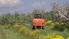 Agriculture tractor spray fertilize blossoming apple orchard industrial garden. Stock Footage