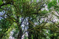 Rainforest at Doi Inthanon National Park in Chiang Mai, Thailand. Stock Photos