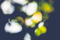 Abstract natural blur background, defocused leaves, bokeh Stock Photos