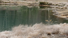 Grass Covered with Frost on the Lake - stock footage