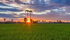 4K Time Lapse Beautiful Sunset On Rice Farm And Colorful Clouds Moving In Sky - stock footage