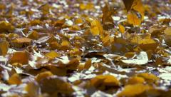 Autumn fall leaves shallow depth of field amber auburn hue - stock footage
