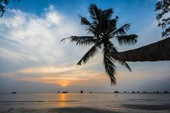 Palm tree at sunset by the sea South China Sea Gulf of Thailand Koh Tao - stock photo