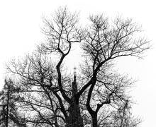 Church Steeple Behind Tree - stock photo