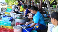 Woman cleaned squid drying in the fishing village. Koh Phangan, Thailand Stock Footage