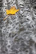 Single Autumn Fall Leaf Rain Wet Weather Background - stock photo