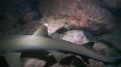 Close up white tip shark fins night Stock Footage