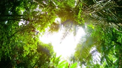 Sun and Rain through a Clearing in the Jungle Canopy, with Sound Stock Footage