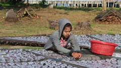 Woman lays squid drying in the fishing village. Koh Phangan, Thailand Stock Footage