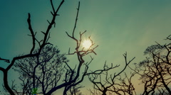 Stock Video Footage of Apocalyptic scenery burned out branches with polluted sky and sun background 30p