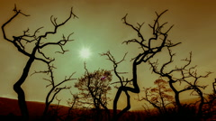 Apocalyptic scenery burned out branches with polluted sky and sun background 25p - stock footage