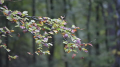 Autumnal forest Stock Footage
