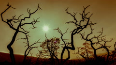 4K 30p Apocalyptic scenery burned out trees,polluted sky and sun background - stock footage