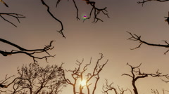 Stock Video Footage of Apocalyptic scenery burned out branches with polluted sky and sun background 25p
