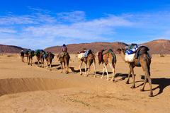 Camel caravan going through the desert Kuvituskuvat