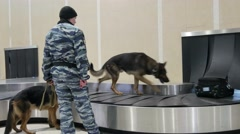 Service dogs looking for drugs in the luggage of passengers. Stock Footage