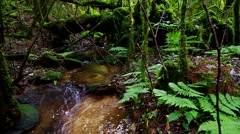 Spring source at headwater Stock Footage
