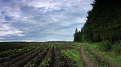 Sunset over the field. Pochinok village, Sverdlovsk region, Russia Stock Footage