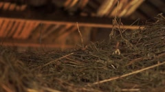Pile of straw inside of a dark barn Stock Footage