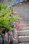 Multicolored flowerbed on a front of a stone building staircase Stock Photos