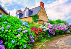 Colorful Hydrangeas flowers in a small village, Brittany, France Stock Photos