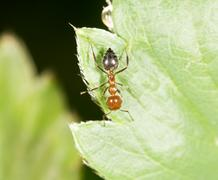 Ant on green leaf in nature. close-up Stock Photos