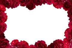 Frame with bush of red rose flowers background isolated on white - stock photo