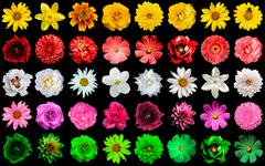 Mega pack collage 40 in 1 of yellow, red, white, rose, green flowers Stock Photos