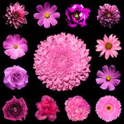 Mix collage square styled of natural and surreal pink flowers 13 in 1 - stock photo
