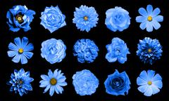 Mix collage of natural and surreal blue flowers 15 in 1 - stock photo