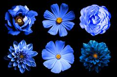Mix collage of natural and surreal blue flowers 6 in 1 Stock Photos