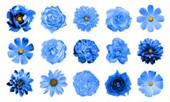 Mix collage of natural and surreal blue flowers 15 in 1 Stock Photos