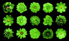 Stock Photo of Mix collage of natural and surreal green flowers 15 in 1