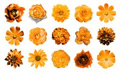 Stock Photo of Mix collage of natural and surreal orange flowers 15 in 1