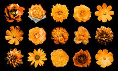 Mix collage of natural and surreal orange flowers 15 in 1 Stock Photos