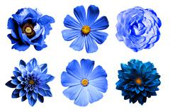 Stock Photo of Mix collage of natural and surreal blue flowers 6 in 1