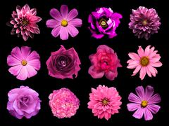 Mix collage of natural and surreal pink flowers 12 in 1 Stock Photos