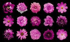 Mix collage of natural and surreal pink flowers 15 in 1 Stock Photos