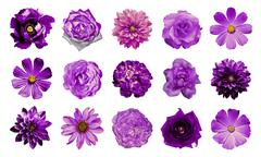 Mix collage of natural and surreal violet flowers 15 in 1 Stock Photos