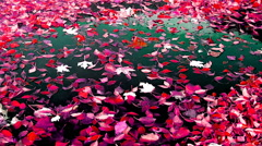 Red leaves in a pool, special effect - stock footage