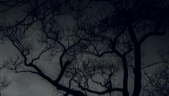 Black and white branches timelapse scary trees Stock Footage