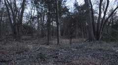 Running in the Woods at Night Stock Footage