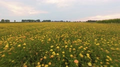 Colorful summer meadow 4k aerial video Stock Footage
