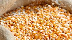 Seeds of corn Stock Footage