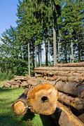 Forest deforestation Stock Photos